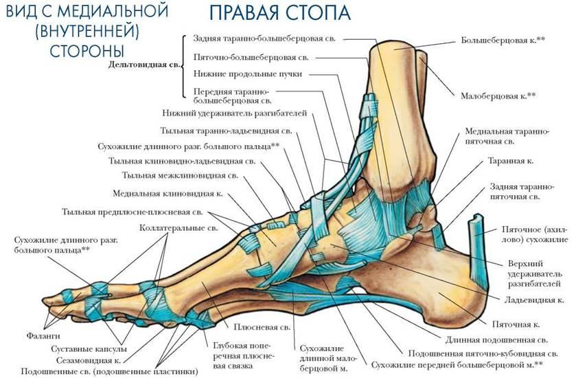 Ортез при переломе таранной кости